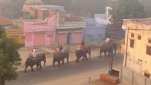 Jaipur (24)