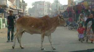 Jaipur (49)
