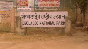 Keoladeo National Park (23)