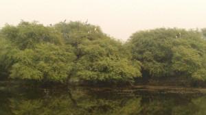 Keoladeo National Park (34)
