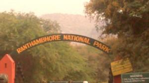 Ranthambhore National Park (2)