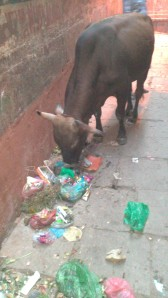Varanasi (132)