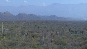 Oaxaca (84)