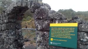 Rangitoto island (28)