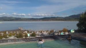Rotorua (14)
