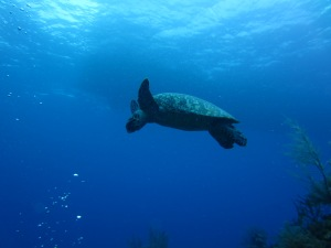 Caye Caulker immersioni (11)
