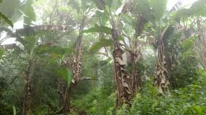 Isla Ometepe (37)