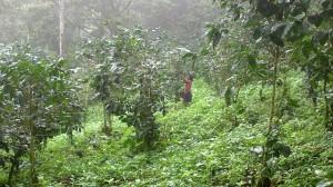 Isla Ometepe (42)