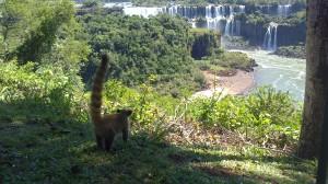 Cascate Iguazu brasile (12)