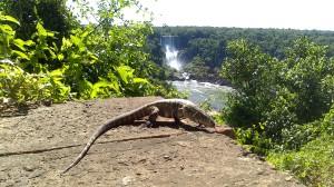 Cascate Iguazu brasile (31)