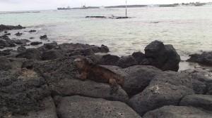 Isola Santa Cruz (18)
