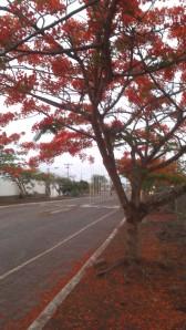 Isola Santa Cruz (26)
