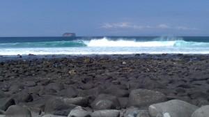 Isola Seymour norte (15)
