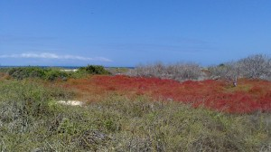 Isola Seymour norte (7)