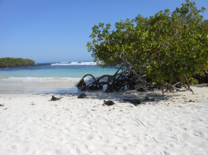 Tortuga bay (36)