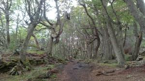 Parco Tierra del Fuego (10)