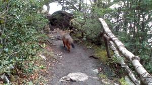 Parco Tierra del Fuego (9)