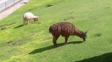 Cusco (11)