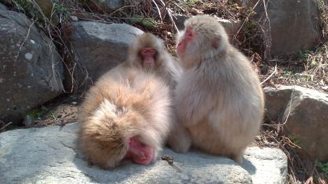Jigokudani Yaen Koen_monkey spa (10)