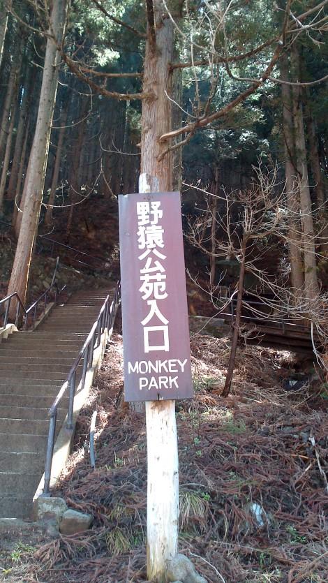 Jigokudani Yaen Koen_monkey spa (2)