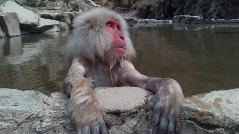 Jigokudani Yaen Koen_monkey spa (47)