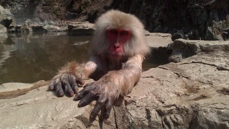 Jigokudani Yaen Koen_monkey spa (60)