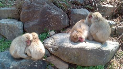 Jigokudani Yaen Koen_monkey spa (7)