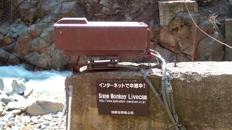 Jigokudani Yaen Koen_monkey spa (73)