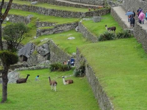 Machu Picchu (37)