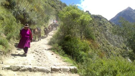 Machu Picchu (49)