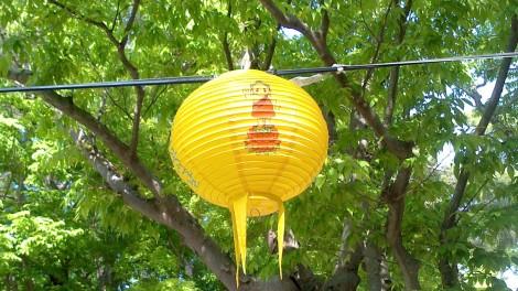 blog busan jeju gyeonju (115)