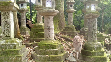 blog Kyoto Nara Iga (69)
