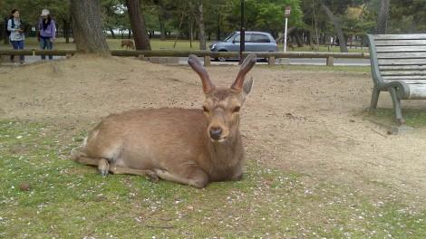 blog Kyoto Nara Iga (70)