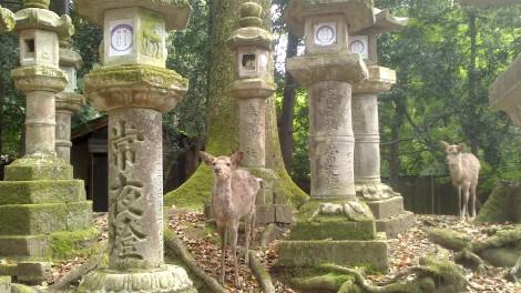 blog Kyoto Nara Iga (75)