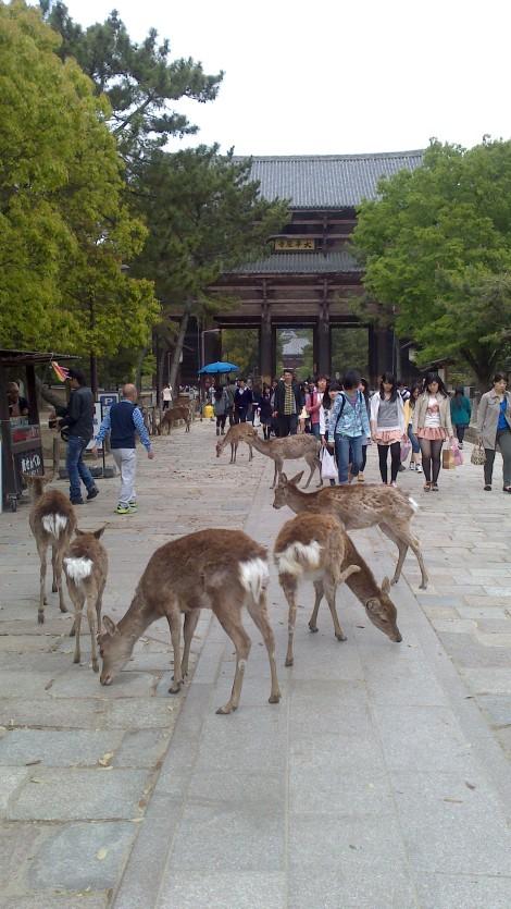 blog Kyoto Nara Iga (77)