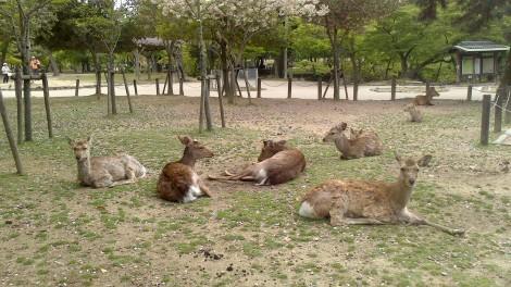 blog Kyoto Nara Iga (78)