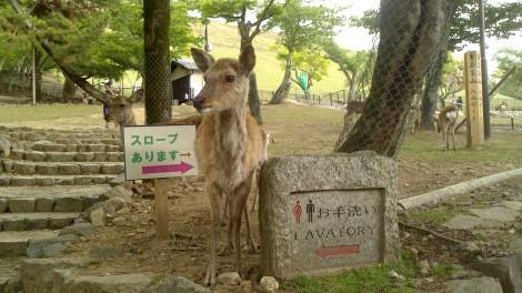 blog Kyoto Nara Iga (85)