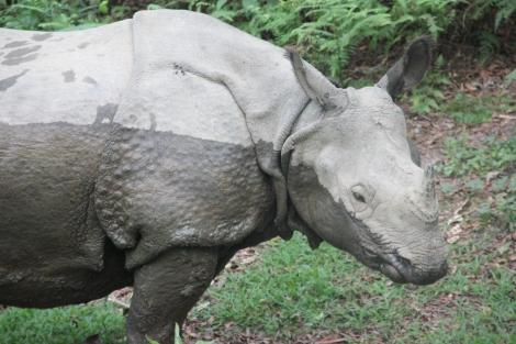 Chitwan (1)