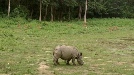 Chitwan (20)
