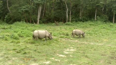 Chitwan (21)