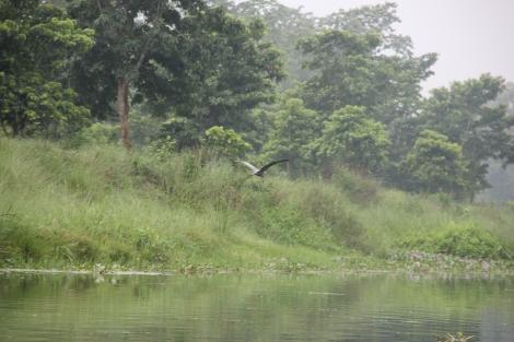 Chitwan (28)