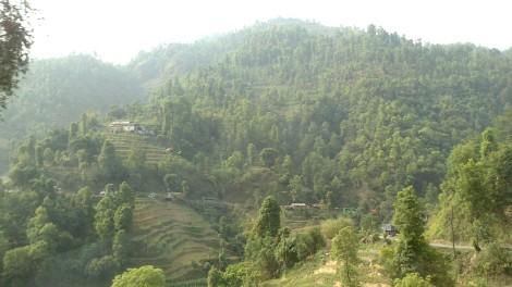 Chitwan (4)