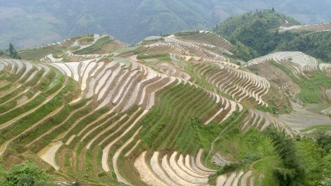 Guilin_Rice fields (1)