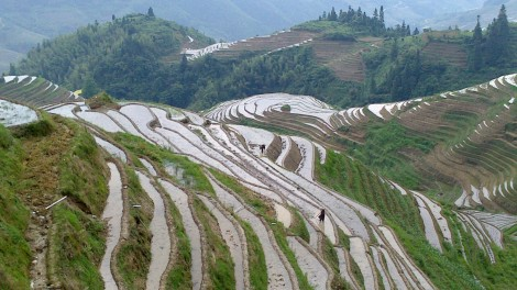 Guilin_Rice fields (18)