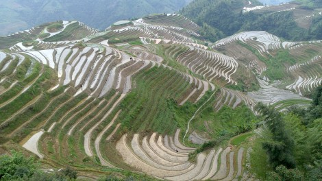 Guilin_Rice fields (20)