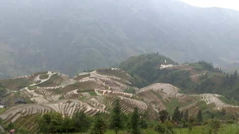 Guilin_Rice fields (22)