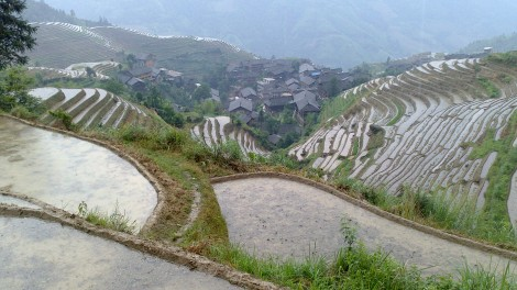 Guilin_Rice fields (23)