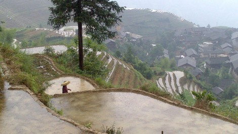 Guilin_Rice fields (24)