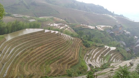 Guilin_Rice fields (25)