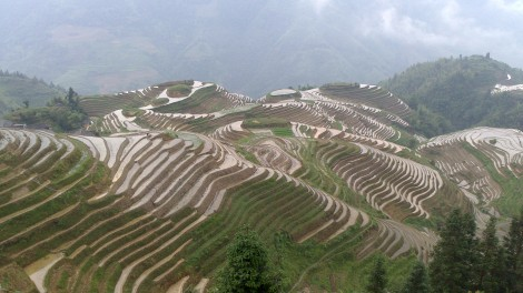 Guilin_Rice fields (26)